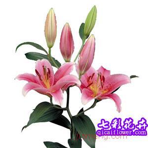 七彩花卉鲜花加盟